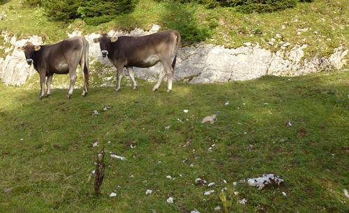 Karyatide Cows - André Ourednik - 2011